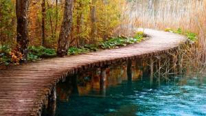 a_walk_through_nature-965053