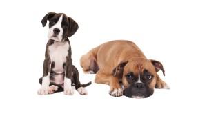 puppy-w-elder