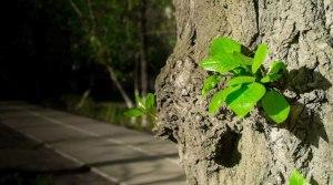 fresh-green-tree-shoots-000065164259_large