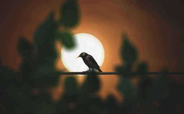 black bird perching on rod