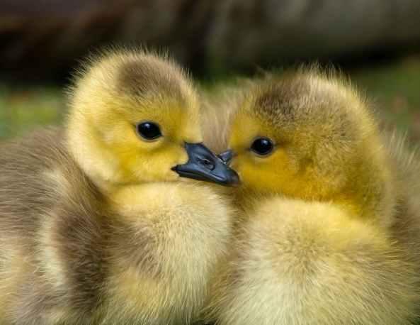 animal baby beak bird